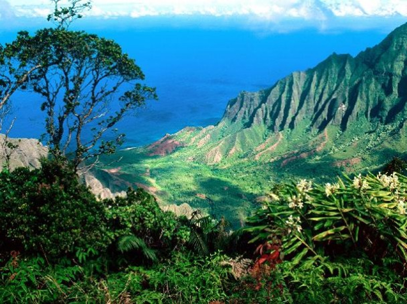 Hawaii Magnetic Gate Opener